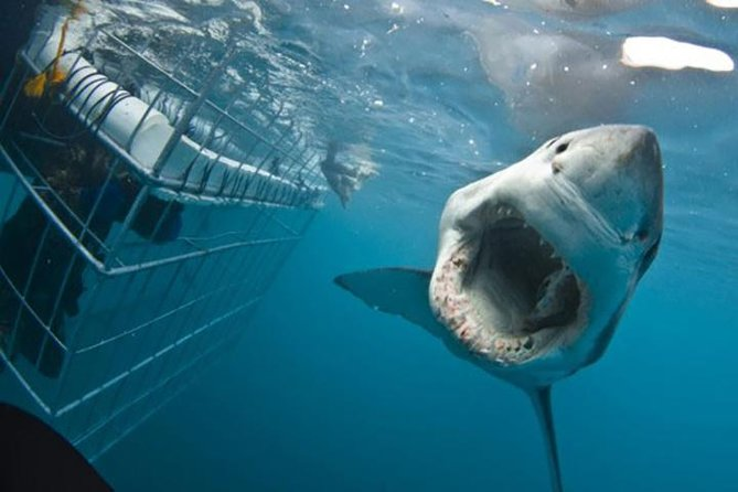 7 Days. Cape Town 5* with Great White Shark Cage Diving