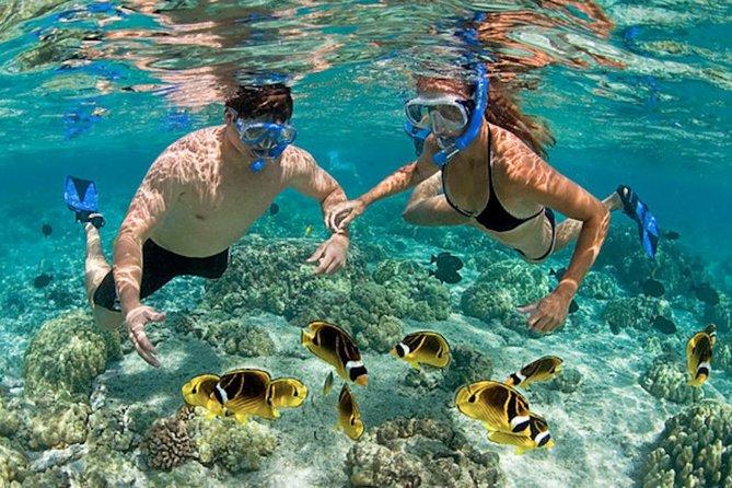 Snorkeling Tour at Hon Mun Island (Small group)