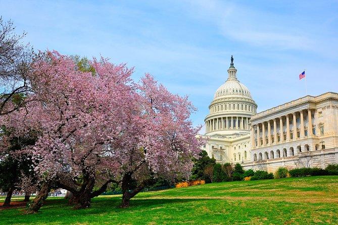 Half Day DC Cherry Blossom Tour