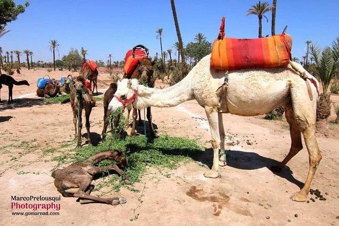 Marrakech ATV og Camel Experience i Agafay Desert