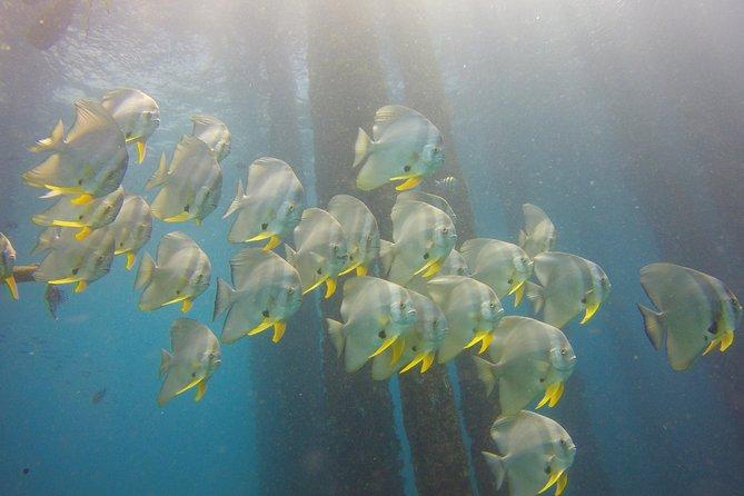 Discover Scuba Diving in Padang Bai