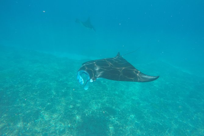 Discover Scuba Diving in Manta Point Nusa Penida