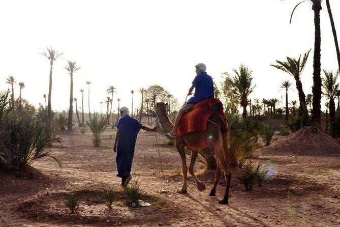 Marrakesh camel ride tour