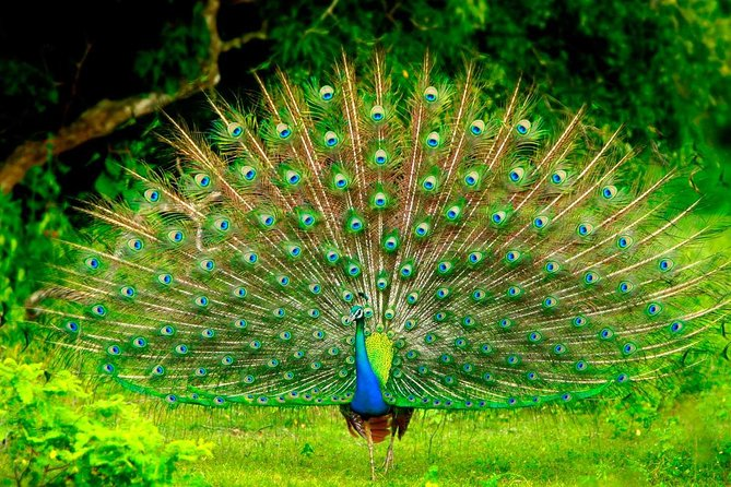 Mirissa To Ella Via Udawalawe Safari With Holiday Walkers Sri Lanka