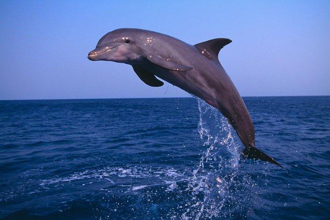 Muscat Dolfijn kijken en snorkelen Cruise