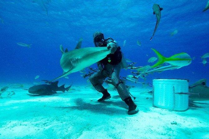 Buceo con tiburones en Gran Bahama