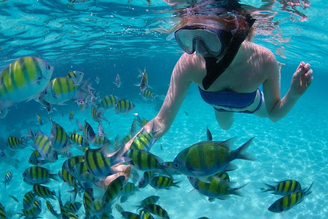 Freeport Snorkeling to Peterson Cay National Park