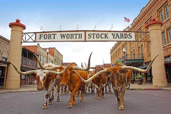 Mr Stockyards VIP Experience