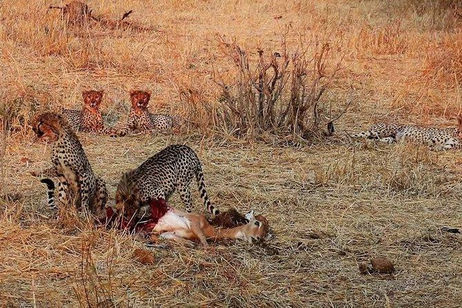 Ruaha National Park And Mikumi National Park Budget Safari 6 Days 5 Nights