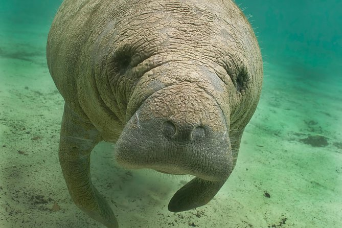 Manatee Sightseeing Eco-Tourism Tour Adventure
