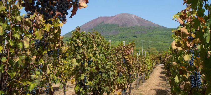 Vesuvius & Vineyard select from Sorrento