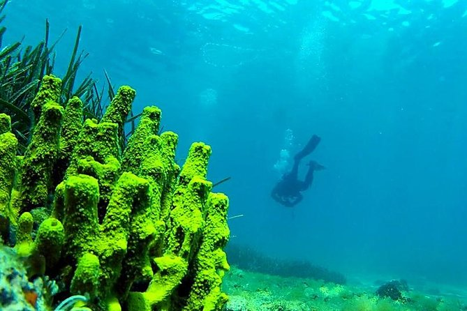2 Dives Package