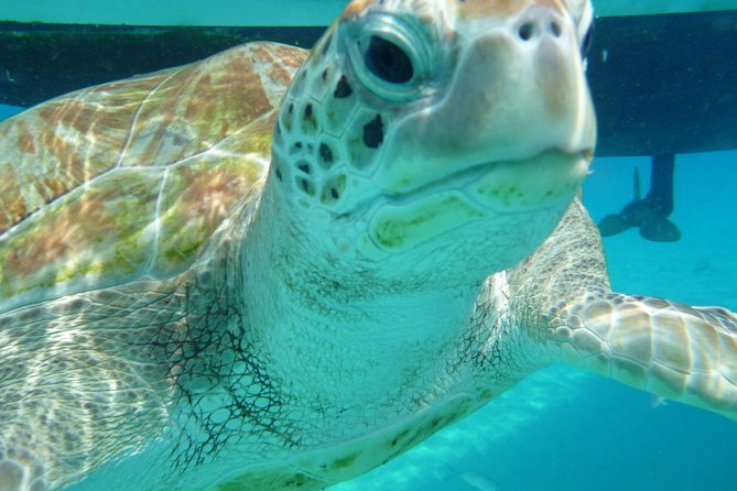 See sea turtles on a sunset sail in Barbados