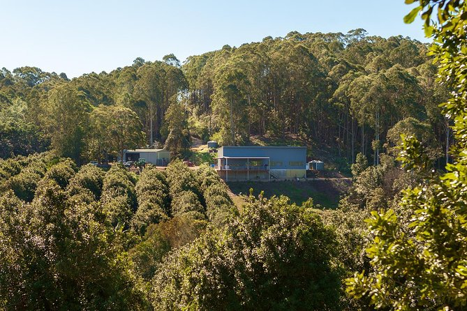 Cape Byron Distillery and Rainforest Tour