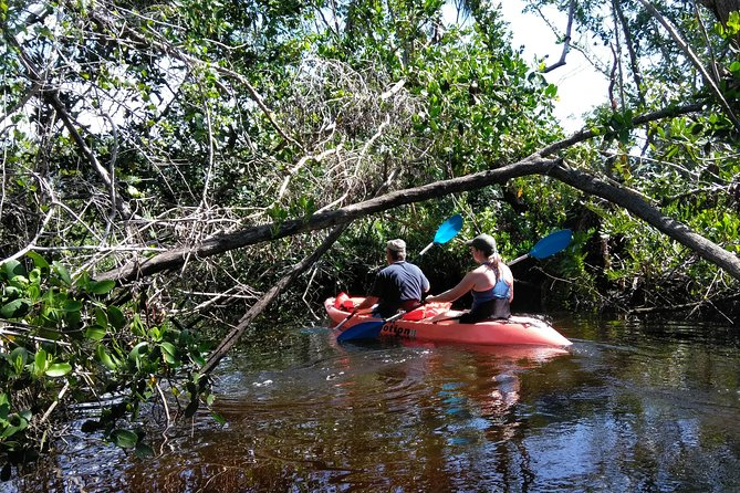 Naples FL, PaddleBoard or Kayak Adventure mangrove forest Tour , For two people
