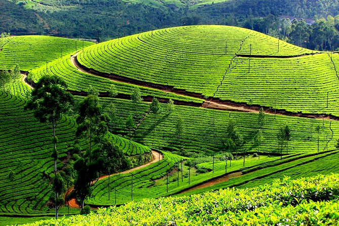 Private 7-Day Kerala Tour From Kochi With Aleppey Houseboat Cruise