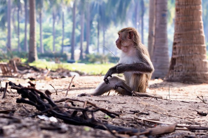 Can Gio - Monkey Island Excursion from Ho Chi Minh City