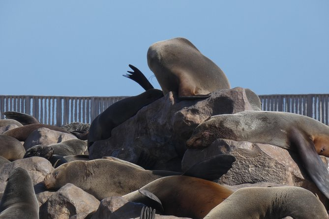 Swakopmund Cape Cross seal colony Day Tours