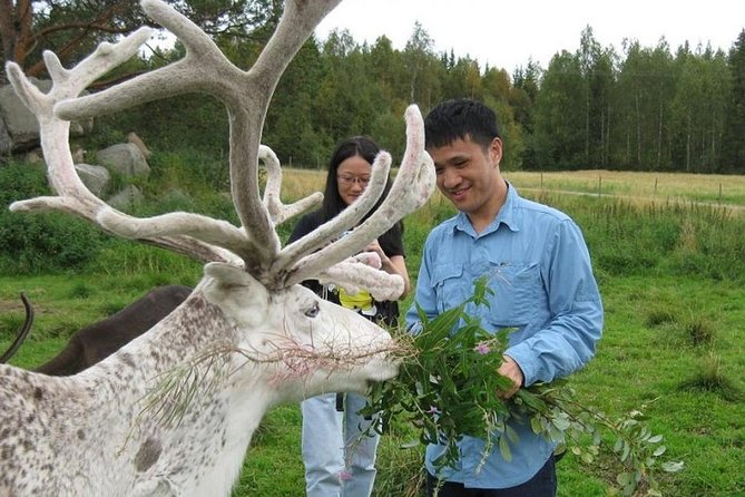 Highlights of Rovaniemi Day Tour - Summer