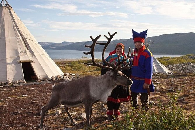 Visit a Sami Reindeer Farm in the Summer