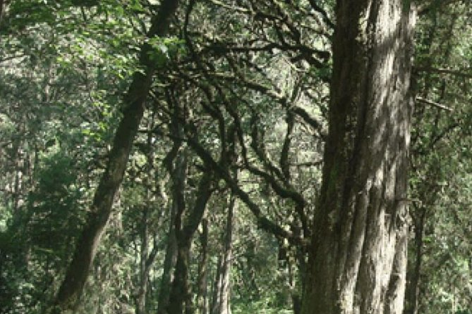 Excursion Tours To See Oldest Suba Forest,Highest Peak Around Ababa,EndemicBirds