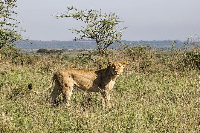 Visite d'un jour à Nairobi avec parc, visite guidée du centre Giraffe de l'orphelinat des éléphants