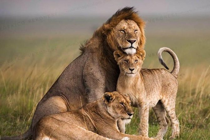 Nairobi National Park Half Day Trip Guided Tour
