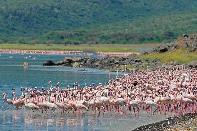 1 Day Lake Nakuru National Park -Day With Flamingos GUARANTEED Daily Departure
