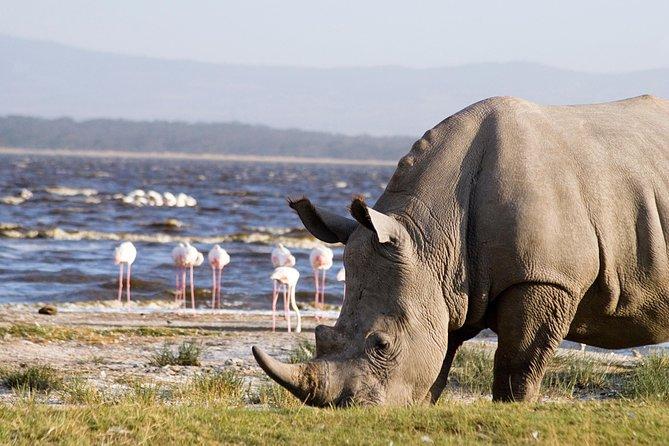 4 Days group joining budget safari to Maasai Mara and Lake Nakuru national parks