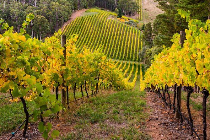 Private Adelaide Hills Wine Region Tour