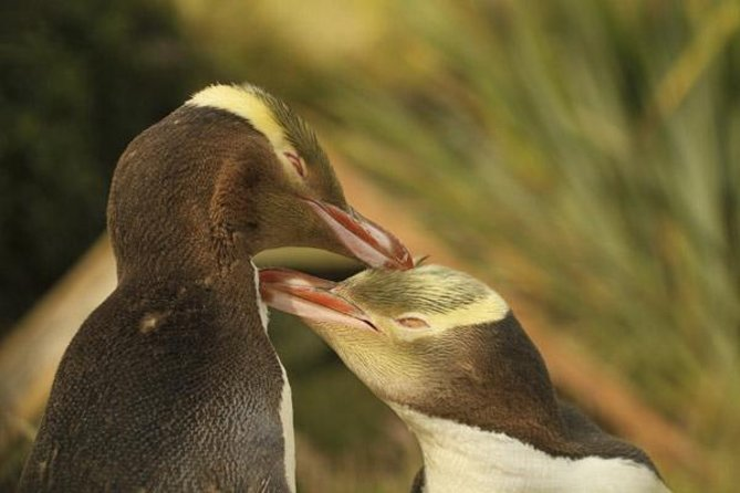 Dunedin and the Otago Peninsula Wildlife Tour