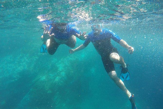Esnórquel con delfines en las Azores
