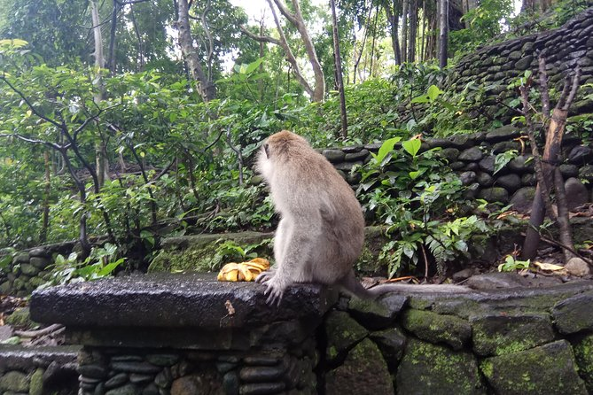 Ubud Monkey Forest, Art Market, Royal Palace,Tegalalang Rice Terrace