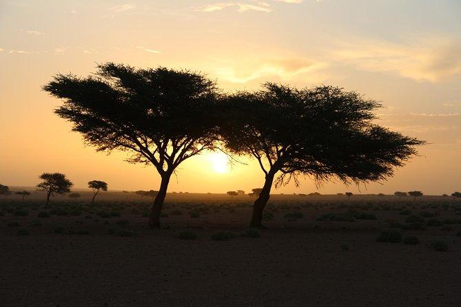 Oasis & desert