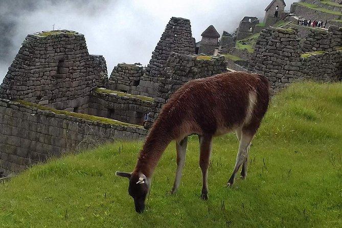 Guidet Machu Picchu Tour fra Aguas Calientes
