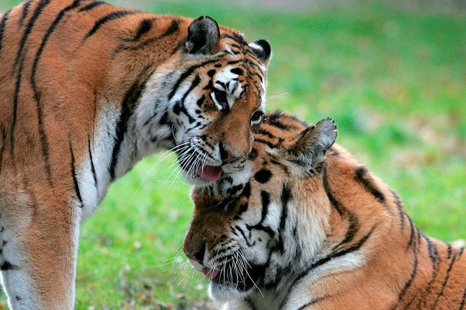 Evite as filas: ingresso para o Zoo de Jurques