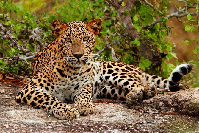 Private Half Day safari at Yala National park
