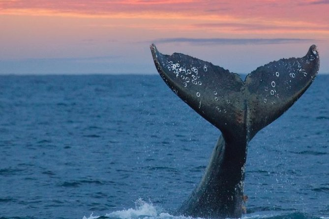 Whale watching and Galle dutch fort Day trip from colombo