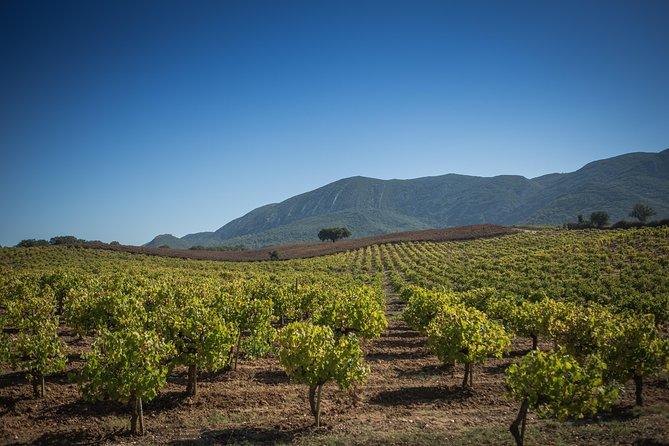 Excursão de vinhos de Arrábida