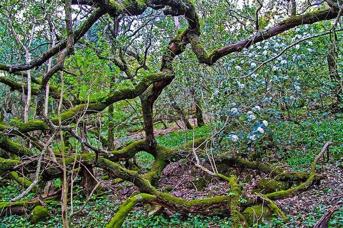 Arrabida woods
