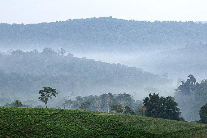 Bwindi Scenery
