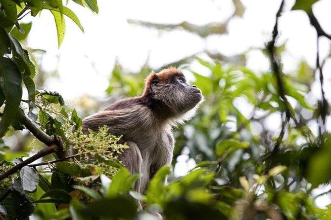 8-Day Murchison Falls, Chimp and Epic Gorilla Trekking Safari