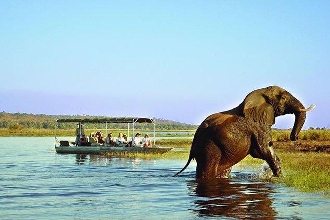 9 Days And 8 Nights Around Zimbabwe Safari Plus Chobe Day Trip (botswana)