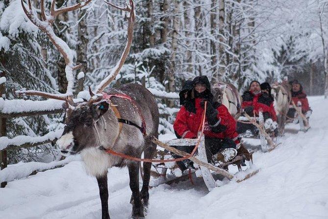 Lapland Northern Lights Erfarenhet av renslak från Luosto