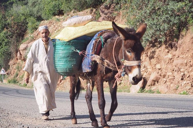 Private Half-day Trip To Ourika Valley From Marrakech Including Camel Ride