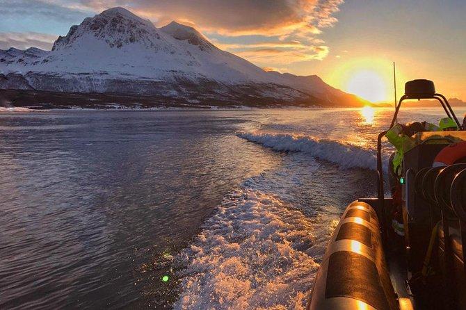 Crociera RIB Midnight Sun da Tromso