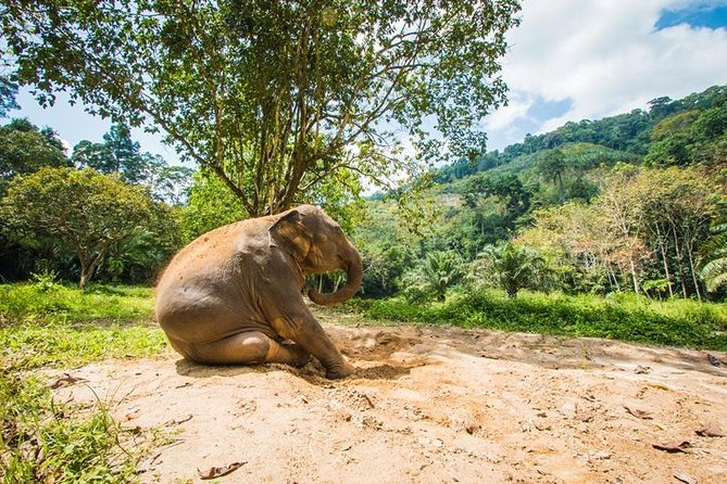 Soins des éléphants, alimentation, conduite de VTT et rafting en eau vive