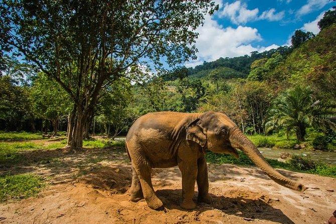 Soins aux éléphants, alimentation et rafting