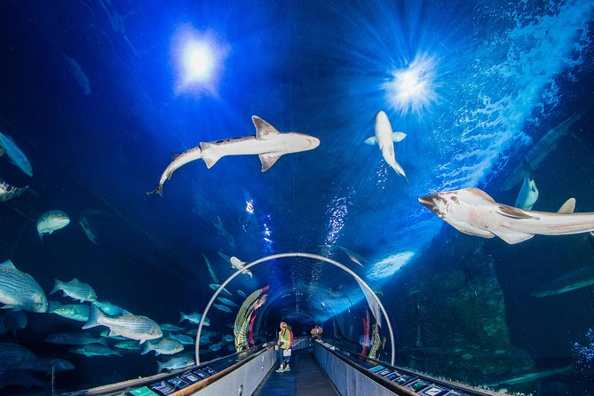 Algemene toegang tot Aquarium of the Bay