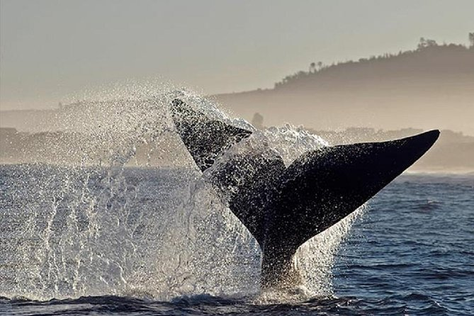 Whale Watching In Hermanus Private Tour